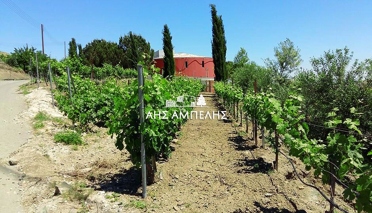 6. Aes Ampelis Winery