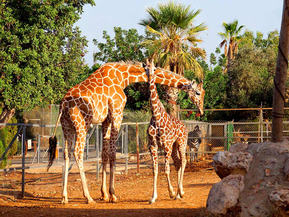 Pafos Zoo (Paphos Bird's & Animals Park)