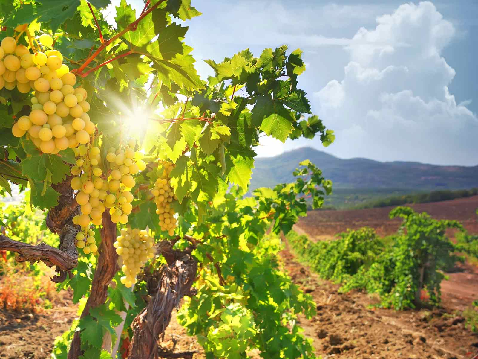 Cyprus Wine Routes